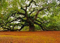 att00052trees-around-the-world.jpg (700×504)