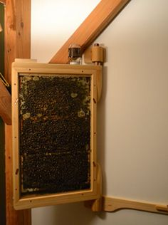 """""""By the way, we have about 8,000 honey bees in our living room."""" As conversation-starters go, this is one of our better ones. And it's true – we do have about 8,000 honey bees in our living room – give or take 1,000. Thankfully they are all very safely contained, with a clear path directly to the out-of-doors."""