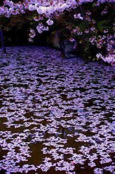 Cerejeira no Japão.