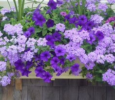 Beautiful flowers with a touch of purple can brighten any garden.