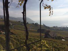 Blick vom Weingut La Croix Duplex auf die Weinberge des Lavaux