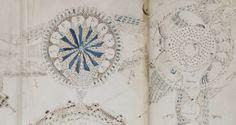 Descodificadas 10 palavras do manuscrito mais misterioso do mundo (com video)