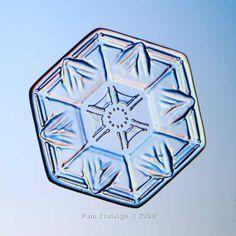 Real Snowflake Jan 5, 2010. Thin hexagonal plate.