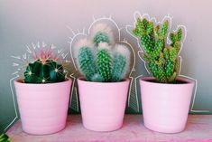 Cute little cactus plants for the bedroom Cacti And Succulents, Planting Succulents, Planting Flowers, Cactus Plante, All The Bright Places, Plant Aesthetic, Plants Are Friends, Cactus Y Suculentas, Echeveria