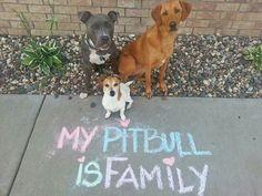My pitbull is family