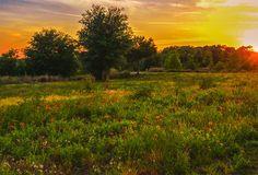 Baldwin Park, Orlando, Florida Central Florida, Orlando Florida, American Pastoral, Orlando Photographers, Baldwin Park, Mosaic Ideas, Landscape Photography, Sunset, Portrait