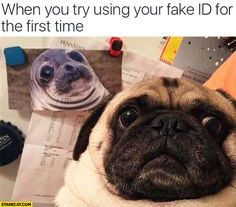 when you try using your fake id for the first - Google Search