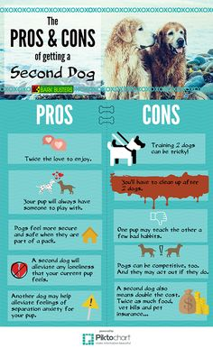 What to Consider When Getting a Second Dog