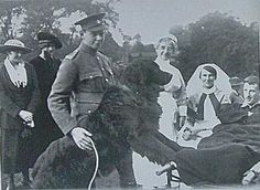 Historical Information about the Newfoundland Dog including art and literature. Historical Images, Therapy Dogs, Newfoundland, Literature, America, History, Art, Dogs, Literatura