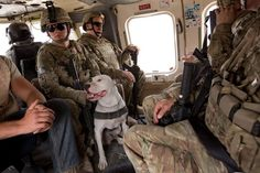 TEDD handler SPC Alexander Reimer and his dog Howard fly in a helicopter on their way to link up with a platoon in Zharay District, Kandahar Province.