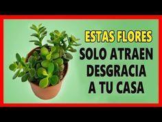 011poderoso amarre en 24 horas o menos - YouTube Zodiac Mind, Fruit Garden, Succulents Garden, Feng Shui, Indoor Plants, House Plants, Farmer, Planter Pots, Remedies