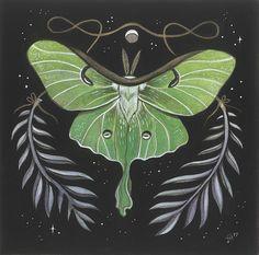 Luna Moth by JillHoffman.deviantart.com on @DeviantArt