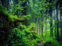 Forbidden Woods by JoannaVeronica.deviantart.com on @DeviantArt