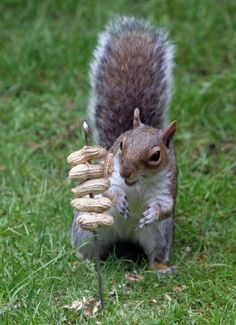Nuts on a skewer!  For me!!! :)