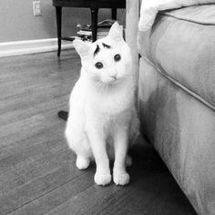 Katten zijn vandaag de dag de helden van het internet. Ze maken bijna alles liefen grappiger en zijn tegelijkertijd een van de grootste vrienden van de mens. Daarom eren wij ze vandaagmet ditlijstje over de tienkattenmet de grappigste vacht! Heb jezelf een kat met een rare vacht? Upload je foto dan HIERRR! En voor meer artikelen over katten, klik HIERRR! De kat met verbaasde wenkbrauwen De twofaced kat De kat met de hoge hoed Liefdevol poesje Mustache De hitler kat De kat met het…