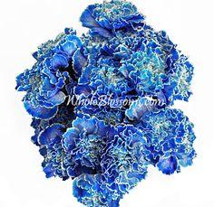 Blue Carnation Flowers 200 stems for $130
