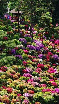 Famous Gardens of the World - Azalea bushes at Shiofune Kannon Temple, Tokyo, Japan