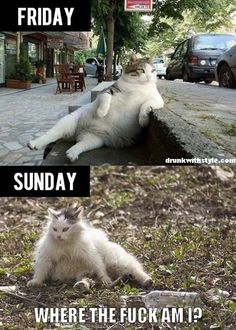 Drunk Friday Compared To Sunday Funny Cat