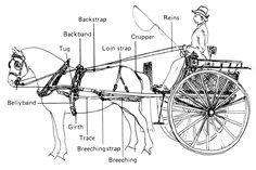 driving posts about <b>horse</b> custom various <b>horse</b> drawn vehicles such