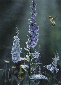 Ruby Throated Hummingbird and Foxglove - Painting by Robin Murray