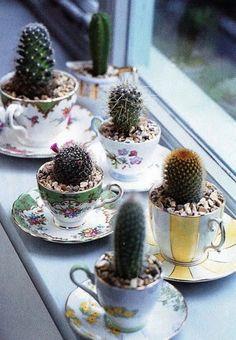 Cactus tea cups