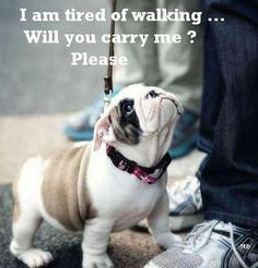 Carry me?