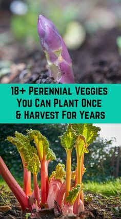 Plant these veggies (and fruits and nuts) just once, and enjoy the fruits of your labor for years, or even decades! This is perfect for lazy gardeners! landscaping 18 Perennial Veggies You Can Plant Once and Harvest For Years Veg Garden, Vegetable Garden Design, Edible Garden, Garden Plants, Flower Gardening, Container Gardening, Garden Shade, Veggie Gardens, Garden Shrubs