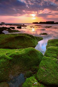 Mossy Rocks Mengening | Flickr: Intercambio de fotos