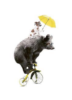 Poster mit Tieren auf Fahrrad...