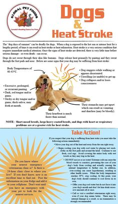 This takes 2 minutes to read, but could save your dog's life this summer!