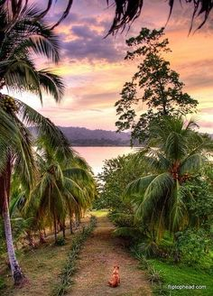 Panama, my husbands 1st home.. We will most certainly be taking a trip to let our children explore their daddy's culture! :)