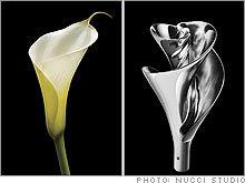Scientific Spirals create Beautiful Biomimicry