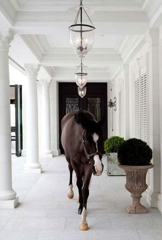 Ever had your horse wander up to the house...looking for you?