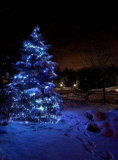 Outdoor Christmas Tree Covered in Snow. Christmas Night, Blue Christmas, Outdoor Christmas, Christmas Holidays, Canada Christmas, Xmas, Victorian Christmas, Vintage Christmas, Christmas Images Hd