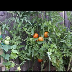 Maters 2011