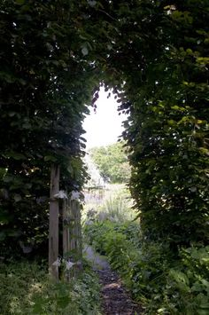 Garden gate -- In and Out of the Garden: June 2009.  Photograph by Louise Jolley