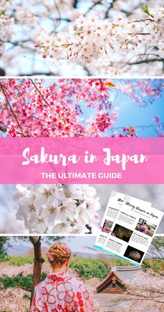 A complete guide to SAKURA - cherry blossom festival in Japan + a free checklist with Tokyo & Kyoto best viewing spots! via @wherelifesgreat