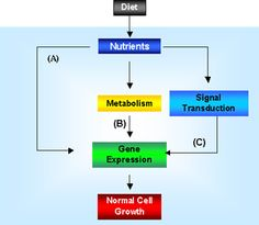 Information - Concepts In Nutrigenomics - Diet And Gene Expression - Nutritional Genomics