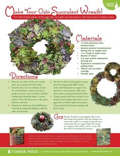 Succulent Ornaments and Wreaths