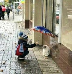 Cute Overload: Internet`s best cute dogs and cute cats are here. Aww pics and adorable animals. Animals For Kids, Animals And Pets, Baby Animals, Funny Animals, Cute Animals, I Love Cats, Cute Cats, Funny Cats, Tier Fotos