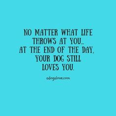 No matter what life throws at you. At the end of the day, your dog still loves you. No matter what life throws at you.& The post No matter what life throws at you. At the end of the day, your dog still loves y& appeared first on Coulson Puppies. Great Quotes, Quotes To Live By, Life Quotes, Inspirational Quotes, Dog Quotes Love, Dog Best Friend Quotes, Puppy Quotes, Dog Sayings, Motivational