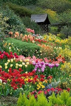 Beautiful Spring Garden spring nature flowers bulbs daffodils garden tulips
