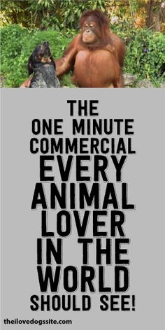 The One Minute Commercial EVERY Animal Lover In The World Should See!
