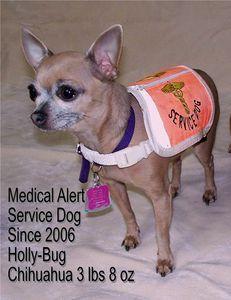 How To Train A Diabetic Alert Dog