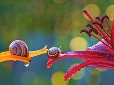 Schnecken sind nicht gerade die Lebewesen, an die du denkst, wenn es um aufregende Tierfotografie geht. Aber gerade um die schleimigen Weichtiere kümmert sich der ukrainische Fotograf Vyacheslav Mishchenko. In seinen Bildern, die er im natürlichen Lebensra