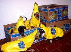 Chiquita banana dogs