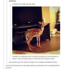 "If I was in this situation, I would just go ""Oh deer"""