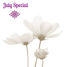 July Service Special: Purchase a 10 pack and receive a complimentary everyday 50 minute massage! This is a $75 value for free! Call to order: Chicago 312-321-0004 | DC 301-637-8691 | www.pullingdownthemoon.com