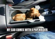 Pup holder!