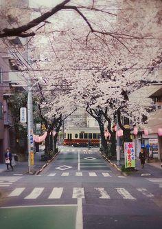 Traveling through Japan from Tokyo, Kyoto, and Osaka, including stays in Shinjuku and Harajuku Aesthetic Japan, City Aesthetic, Japanese Aesthetic, Kyoto Japan, Tokyo Japan, Okinawa Japan, Kanazawa Japan, Japanese Lifestyle, Japan Street